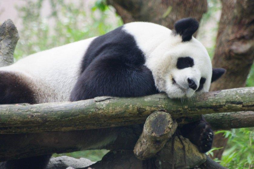 Taipei Zoo Taipei Taiwan.jpg